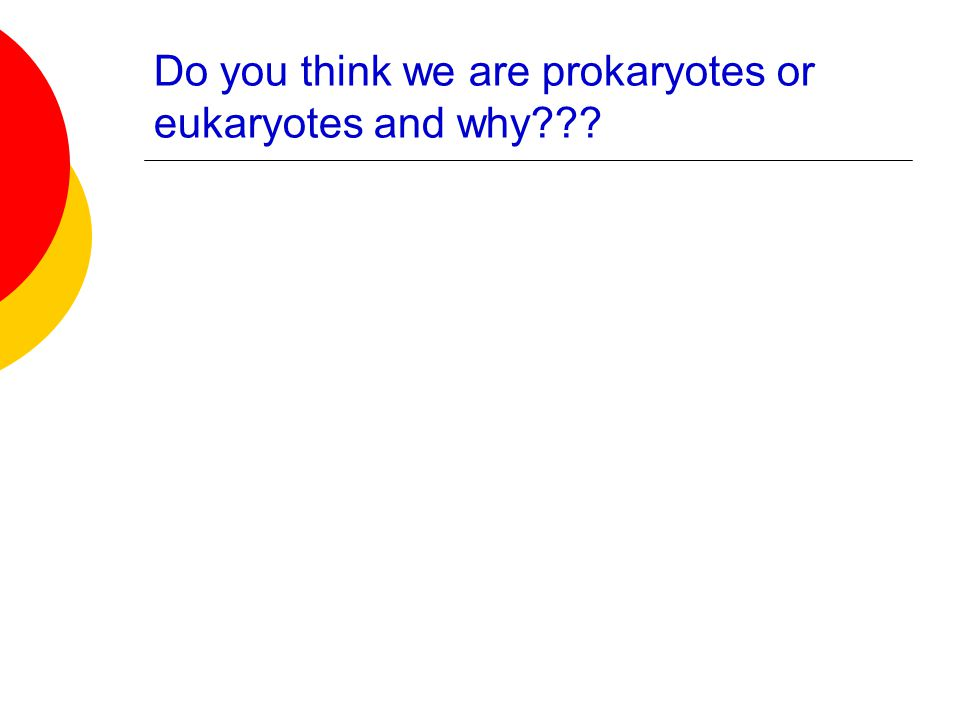 Do you think we are prokaryotes or eukaryotes and why???