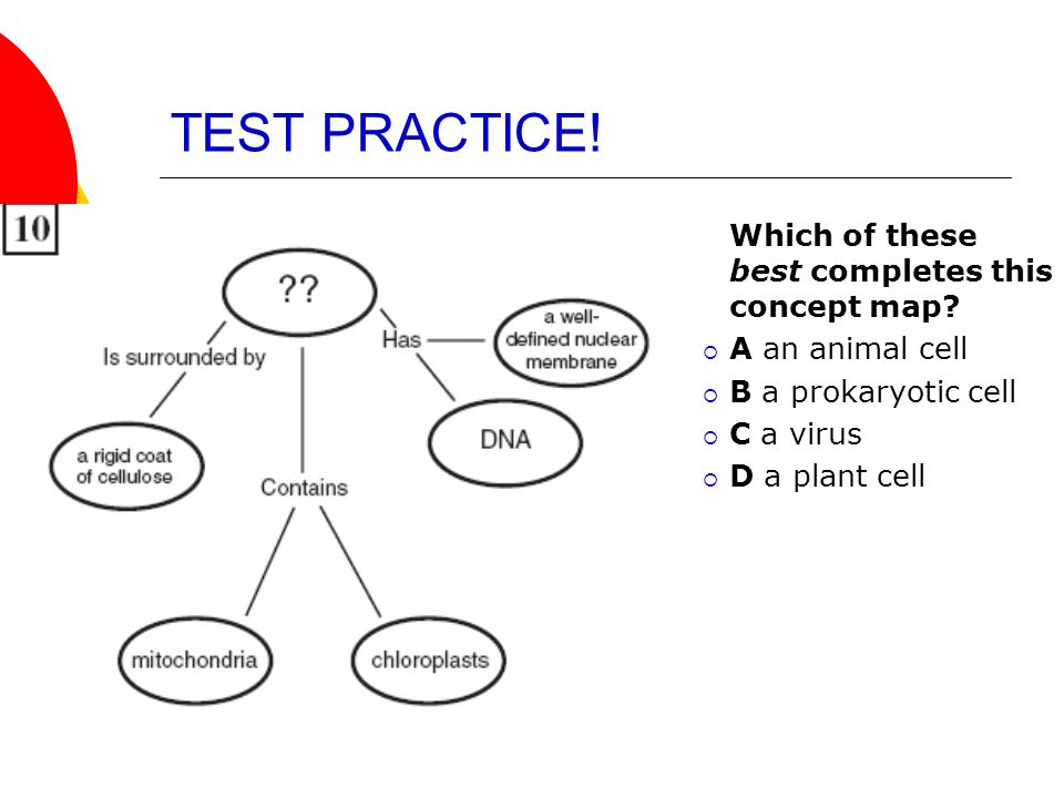 TEST PRACTICE! Which of these best completes this concept map?  A an animal cell  B a prokaryotic cell  C a virus  D a plant cell