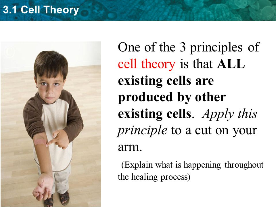 3.1 Cell Theory One of the 3 principles of cell theory is that ALL existing cells are produced by other existing cells.