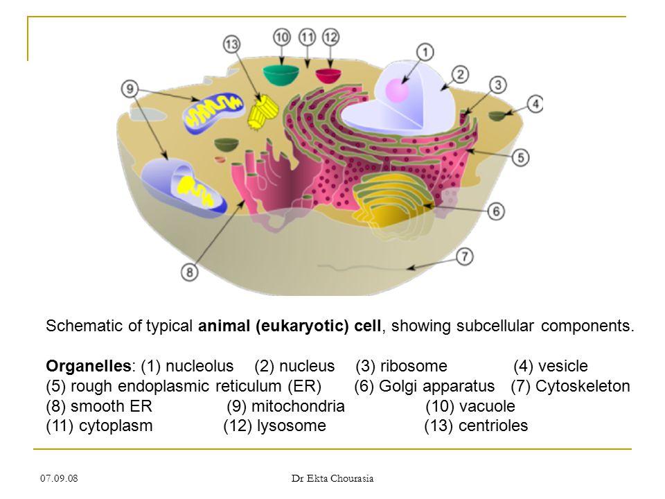 07.09.08 Dr Ekta Chourasia Additional Organelles 3.