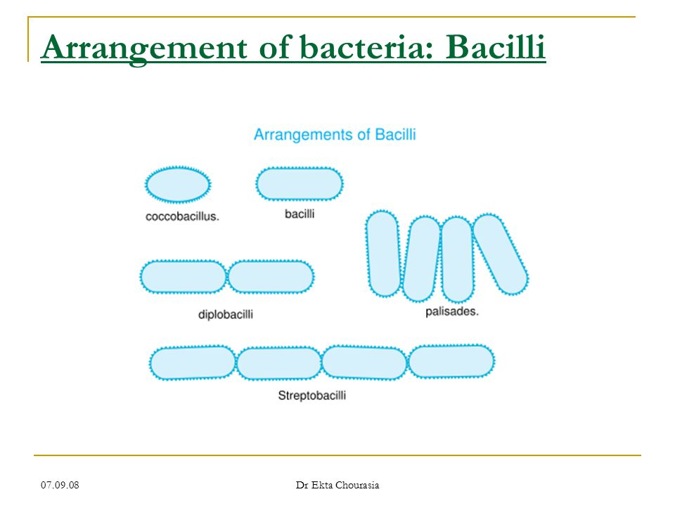 07.09.08 Dr Ekta Chourasia Shape & position of bacterial spore Oval central Spherical central Oval sub terminal Oval terminal Spherical terminal Free spore Non bulging Bulging