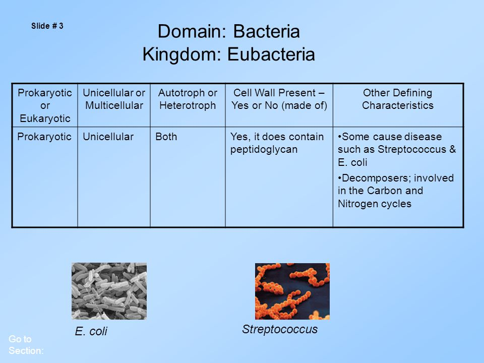 Slide # 3 Domain: Bacteria Go to Section: E.