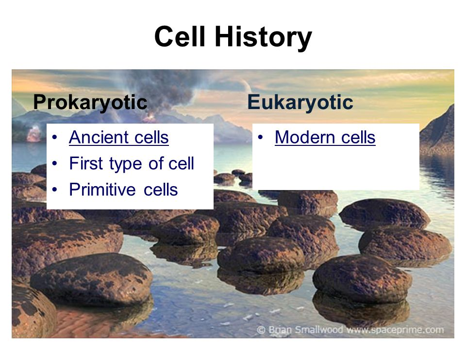 Cell History Prokaryotic Ancient cells First type of cell Primitive cells Eukaryotic Modern cells