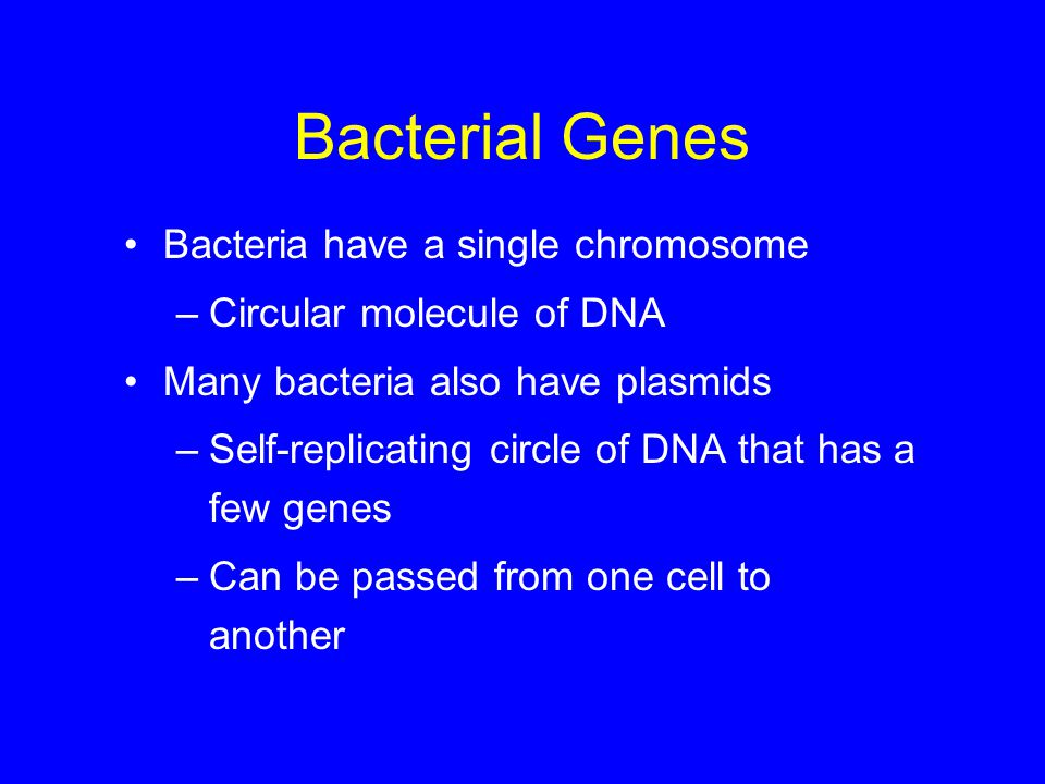 Bacterial Genes Bacteria have a single chromosome –Circular molecule of DNA Many bacteria also have plasmids –Self-replicating circle of DNA that has a few genes –Can be passed from one cell to another