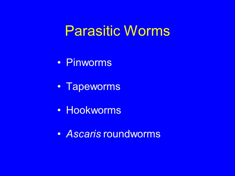 Parasitic Worms Pinworms Tapeworms Hookworms Ascaris roundworms