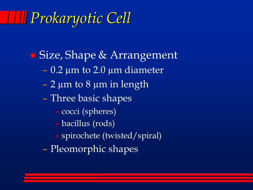 Prokaryotic Cells l Characteristics –Smaller than eukaryotic cells –No nuclei or chromosomes –No membrane-bound internal organelles –Circular genomic DNA –70S Ribosomes –Cell division by binary fission –No meiosis; recombination by transfer of DNA fragments