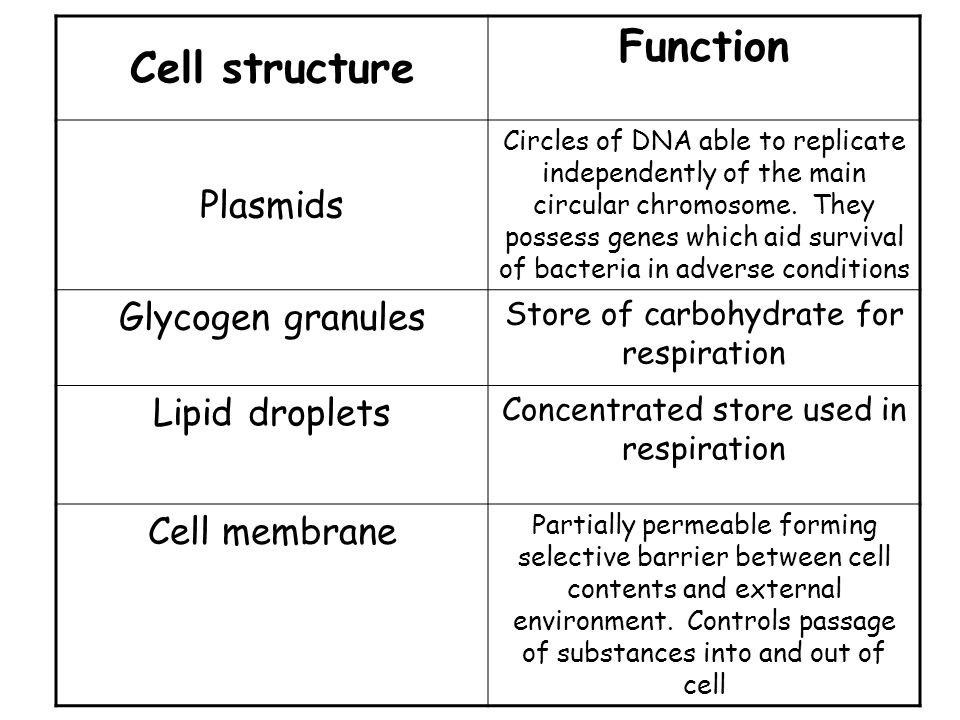 Cell structure Function Plasmids Circles of DNA able to replicate independently of the main circular chromosome.