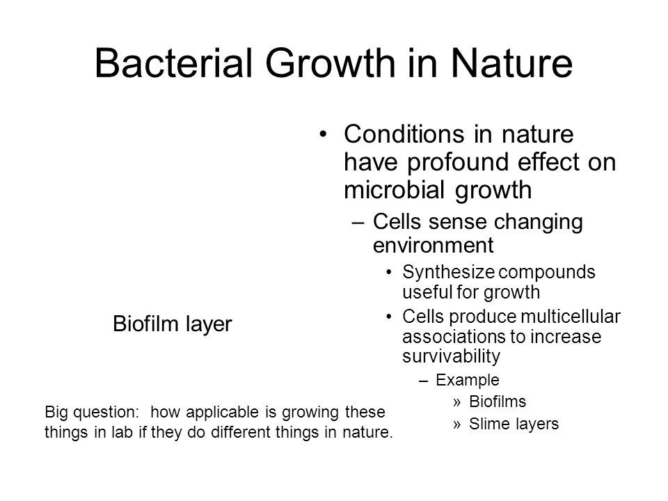 Biofilm –Formation begins when planktonic bacteria attach to surfaces Other bacteria attach and grow on initial layer –Has characteristic architecture Contains open channels for movement of nutrients and waste –Cells within biofilms can cause disease Treatment becomes difficult –Architecture resists immune response and antimicrobials –Bioremediation is beneficial use of biofilm Add nutrients - biostimulation Add other bacteria - bioaugmentation Bacterial Growth in Nature