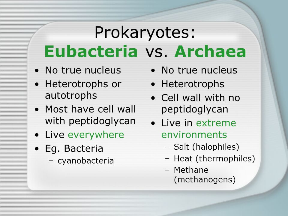 Prokaryotes: Eubacteria vs. Archaea No true nucleus Heterotrophs or autotrophs Most have cell wall with peptidoglycan Live everywhere Eg. Bacteria –cy