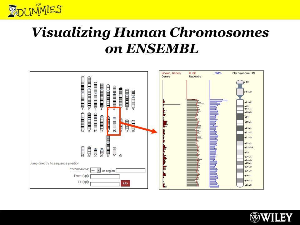 Visualizing Human Chromosomes on ENSEMBL