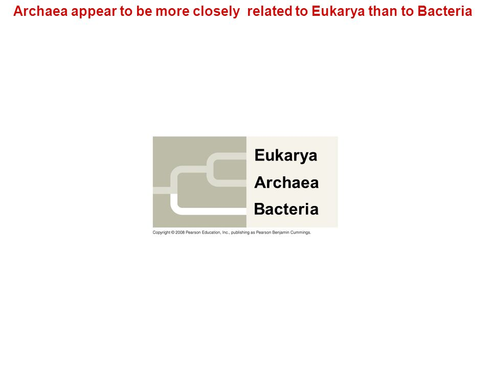 Archaea appear to be more closely related to Eukarya than to Bacteria Eukarya Archaea Bacteria