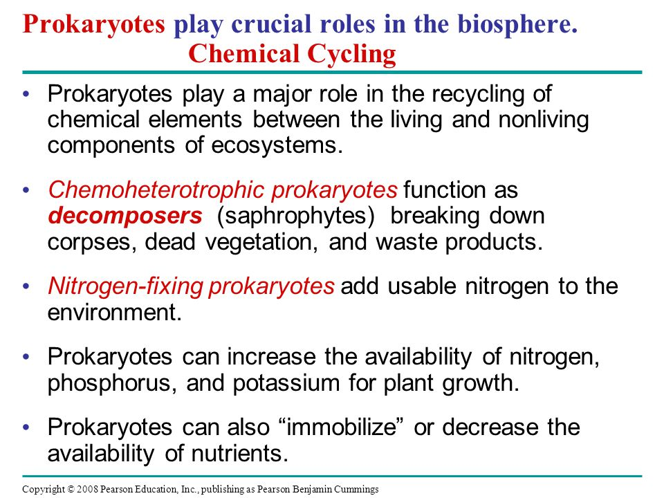 Copyright © 2008 Pearson Education, Inc., publishing as Pearson Benjamin Cummings Prokaryotes play crucial roles in the biosphere.