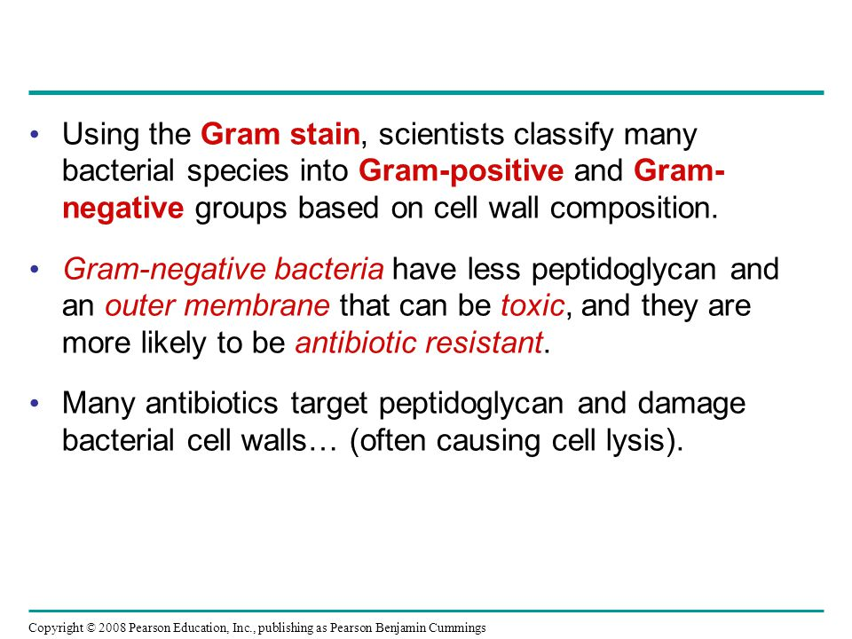 Copyright © 2008 Pearson Education, Inc., publishing as Pearson Benjamin Cummings Using the Gram stain, scientists classify many bacterial species into Gram-positive and Gram- negative groups based on cell wall composition.