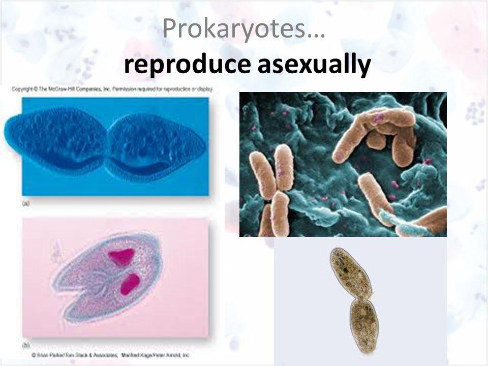 Prokaryotes… reproduce asexually