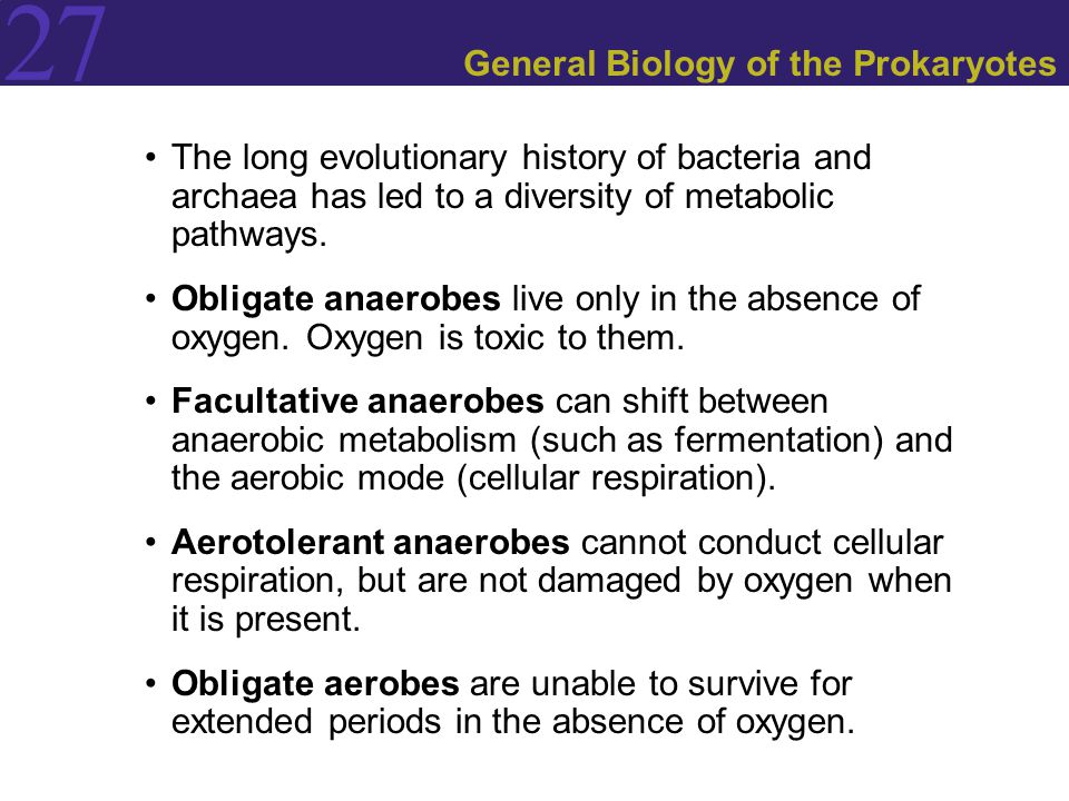27 General Biology of the Prokaryotes The long evolutionary history of bacteria and archaea has led to a diversity of metabolic pathways. Obligate ana