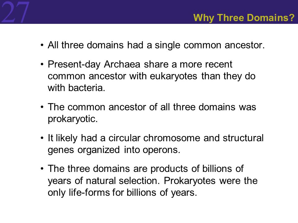 27 Why Three Domains? All three domains had a single common ancestor. Present-day Archaea share a more recent common ancestor with eukaryotes than the