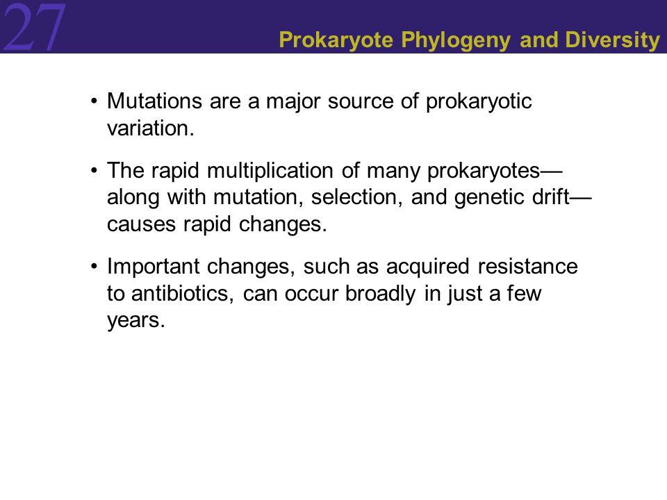 27 Prokaryote Phylogeny and Diversity Mutations are a major source of prokaryotic variation. The rapid multiplication of many prokaryotes— along with
