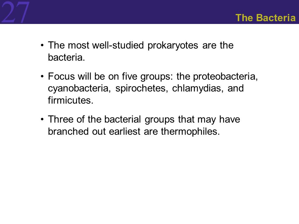 27 The Bacteria The most well-studied prokaryotes are the bacteria. Focus will be on five groups: the proteobacteria, cyanobacteria, spirochetes, chla