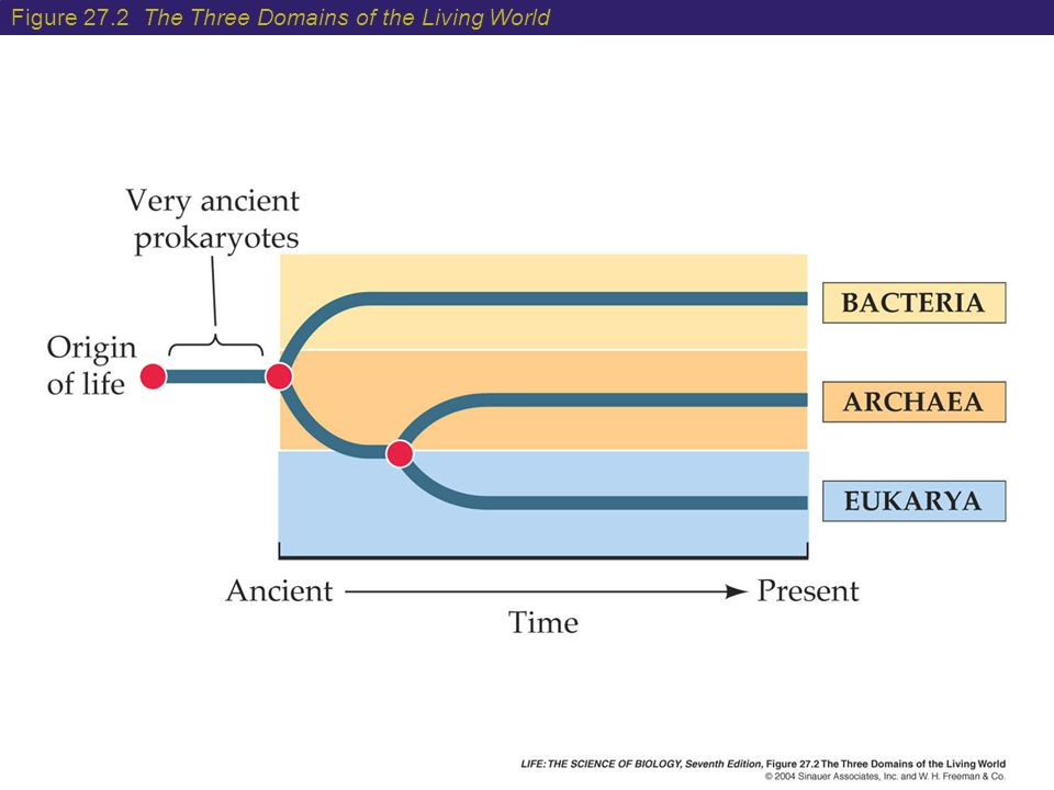 Figure 27.2 The Three Domains of the Living World
