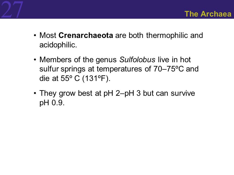 27 The Archaea Most Crenarchaeota are both thermophilic and acidophilic. Members of the genus Sulfolobus live in hot sulfur springs at temperatures of