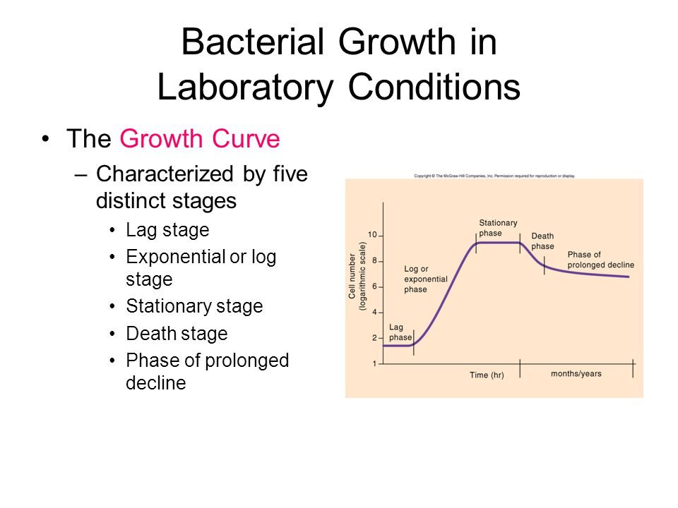 Bacterial Growth in Laboratory Conditions The Growth Curve –Characterized by five distinct stages Lag stage Exponential or log stage Stationary stage