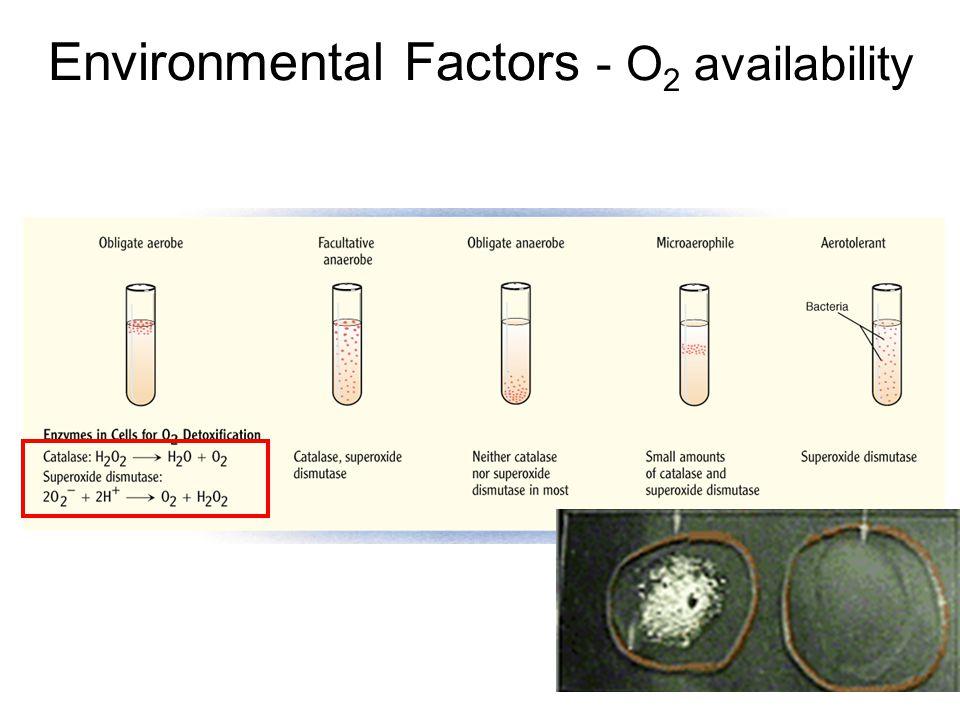 Environmental Factors - O 2 availability