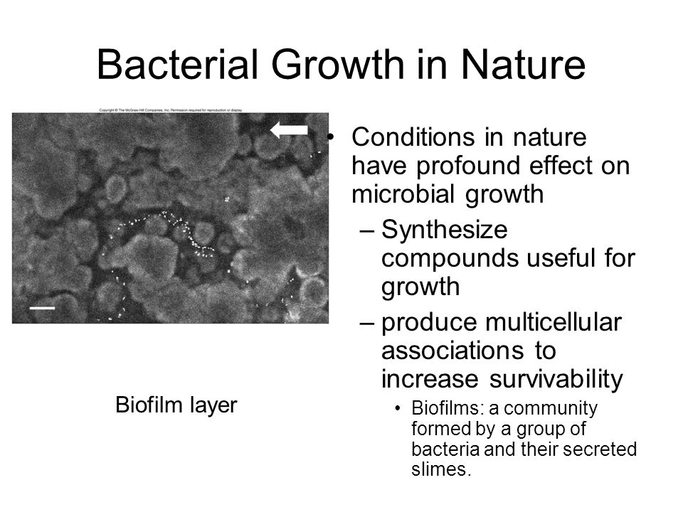 Questions Major factors that affect bacteria growth Growth factor Carbon source and energy source of chemoheterotroph
