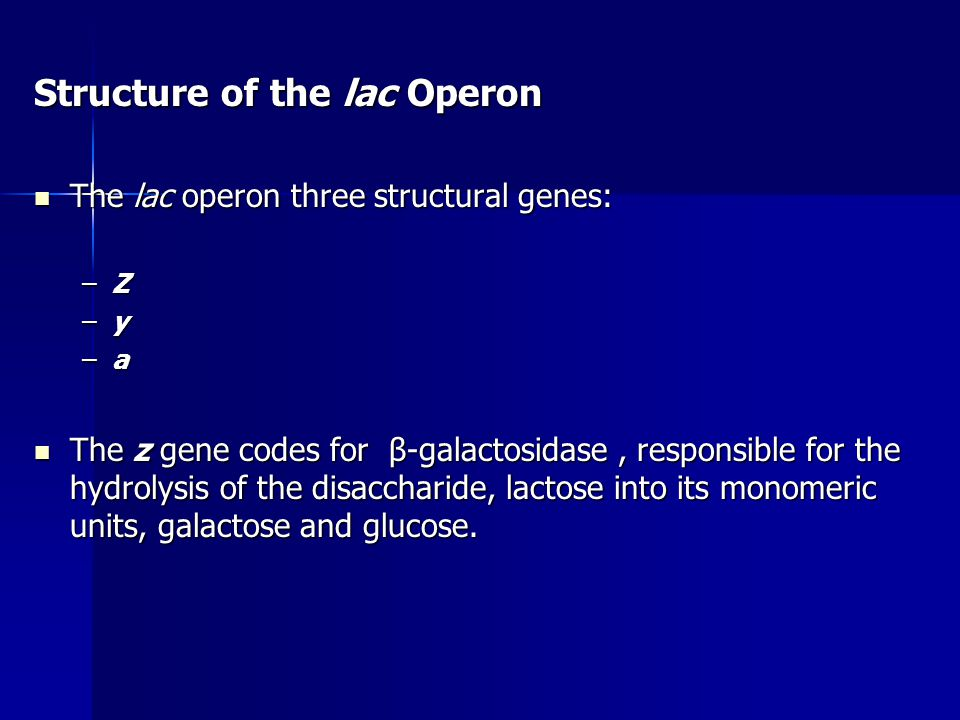 Structure of the lac Operon The lac operon three structural genes: The lac operon three structural genes: –Z –y –a The z gene codes for β-galactosidas