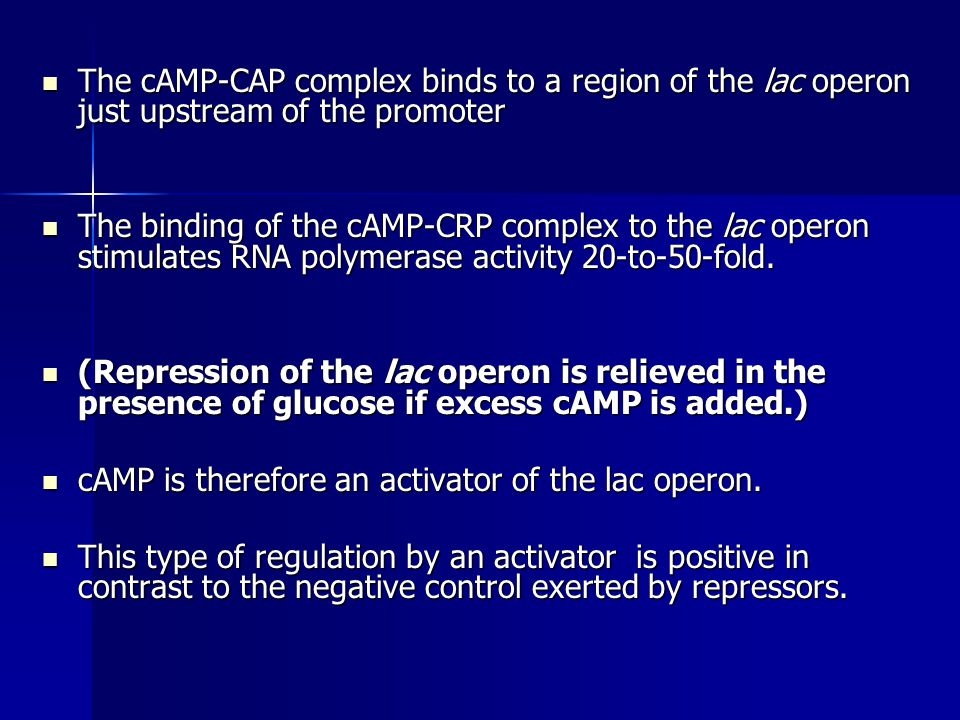 The cAMP-CAP complex binds to a region of the lac operon just upstream of the promoter The cAMP-CAP complex binds to a region of the lac operon just u