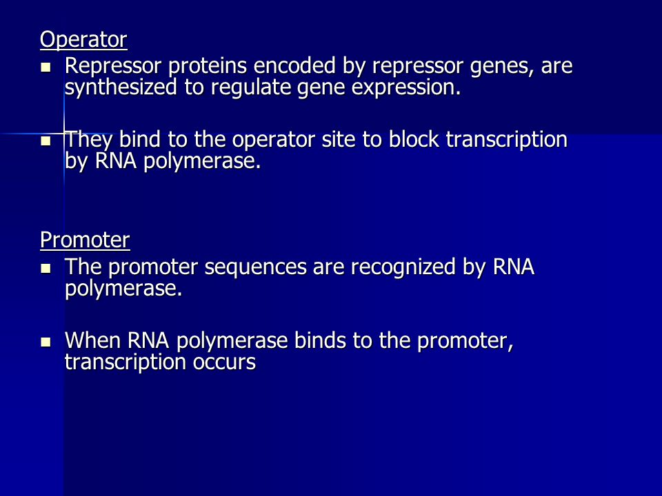 Operator Repressor proteins encoded by repressor genes, are synthesized to regulate gene expression. Repressor proteins encoded by repressor genes, ar