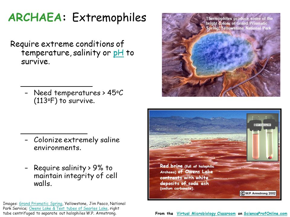 ARCHAEA: Extremophiles Require extreme conditions of temperature, salinity or pH to survive.pH ______________ –Need temperatures > 45 o C (113 o F) to survive.
