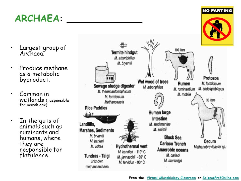 ARCHAEA : _____________ Largest group of Archaea. Produce methane as a metabolic byproduct.
