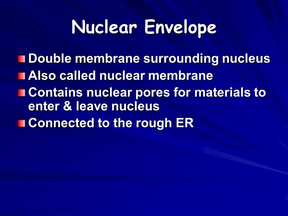 ENDOMEMBRANE SYSTEM Includes nuclear membrane connected to ER connected to cell membrane (transport)