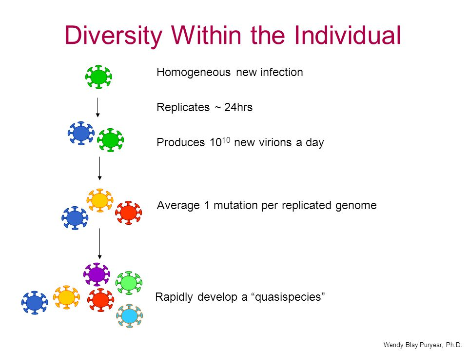 Diversity Within the Individual Average 1 mutation per replicated genome Homogeneous new infection Replicates ~ 24hrs Produces 10 10 new virions a day Rapidly develop a quasispecies Wendy Blay Puryear, Ph.D.