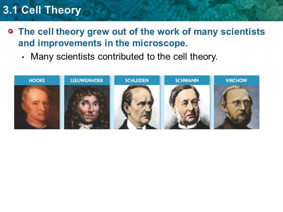 3.1 Cell Theory The cell theory grew out of the work of many scientists and improvements in the microscope. Many scientists contributed to the cell th