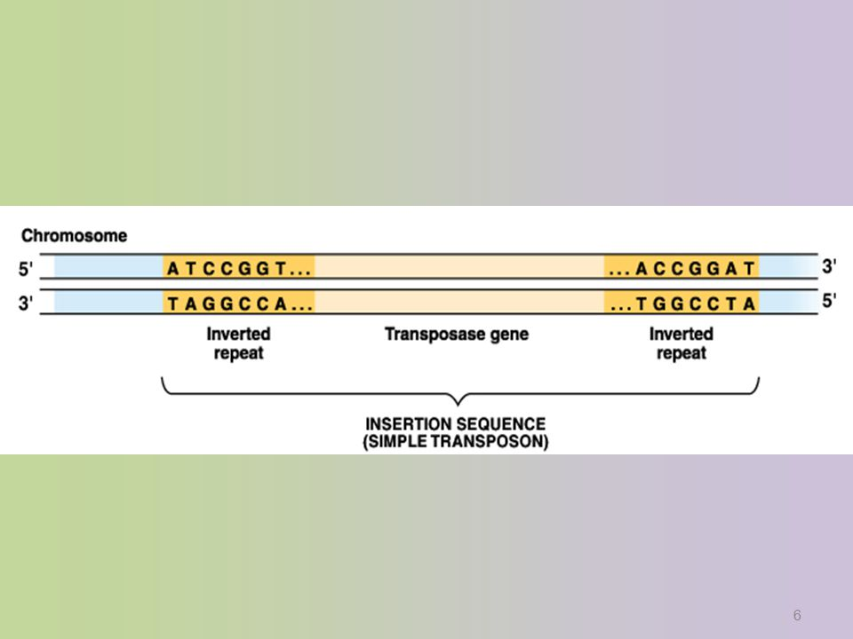 6 Transposase recognizes the inverted repeats