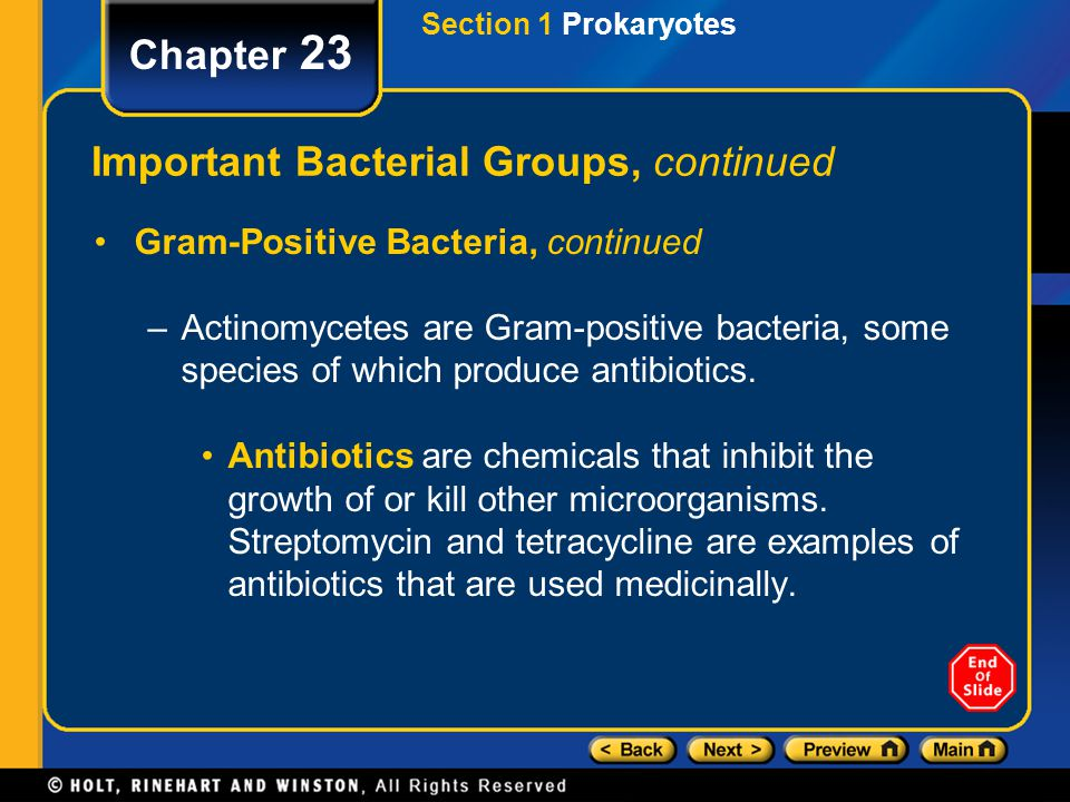 Section 1 Prokaryotes Chapter 23 Important Bacterial Groups, continued Gram-Positive Bacteria, continued –Actinomycetes are Gram-positive bacteria, so