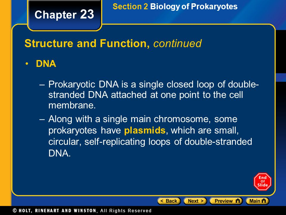 Section 2 Biology of Prokaryotes Chapter 23 Structure and Function, continued DNA –Prokaryotic DNA is a single closed loop of double- stranded DNA att