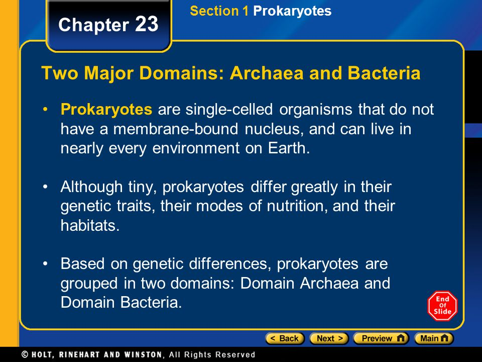 Section 1 Prokaryotes Chapter 23 Two Major Domains: Archaea and Bacteria Prokaryotes are single-celled organisms that do not have a membrane-bound nuc