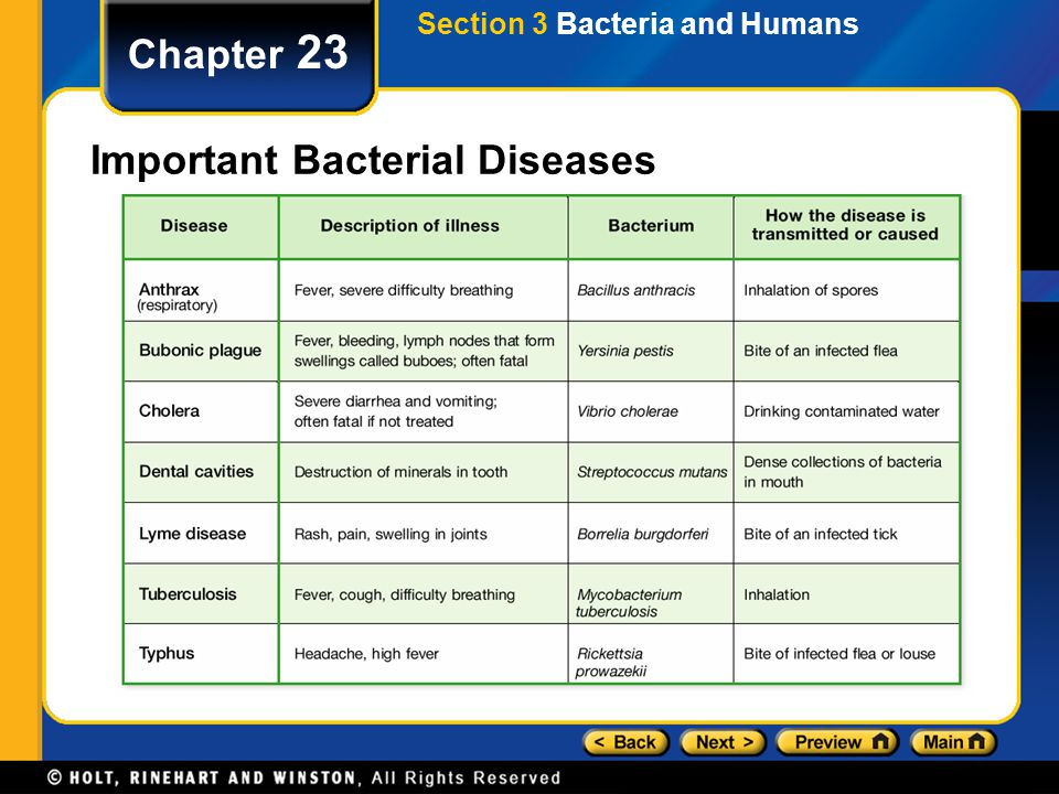 Chapter 23 Important Bacterial Diseases Section 3 Bacteria and Humans