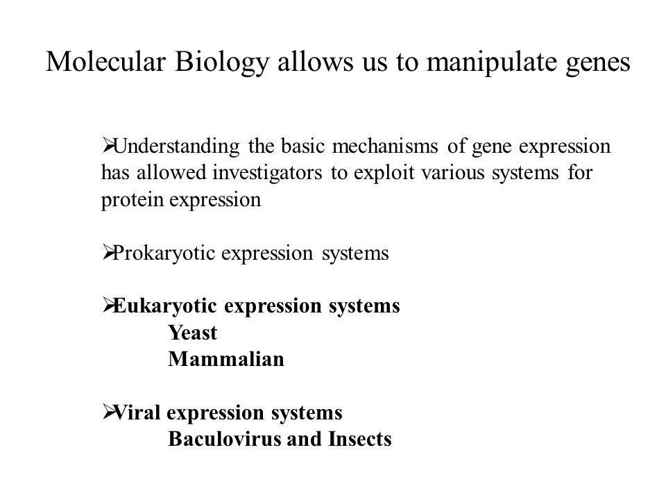 Molecular Biology allows us to manipulate genes  Understanding the basic mechanisms of gene expression has allowed investigators to exploit various systems for protein expression  Prokaryotic expression systems  Eukaryotic expression systems Yeast Mammalian  Viral expression systems Baculovirus and Insects