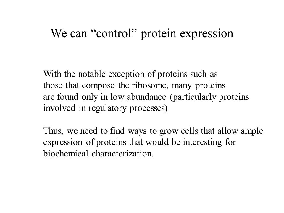 We can control protein expression With the notable exception of proteins such as those that compose the ribosome, many proteins are found only in low abundance (particularly proteins involved in regulatory processes) Thus, we need to find ways to grow cells that allow ample expression of proteins that would be interesting for biochemical characterization.