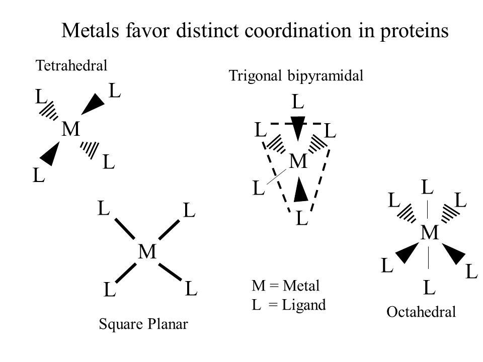Metals favor distinct coordination in proteins M L L L L M L L L L M L LL L L L M L L L L L Tetrahedral Square Planar Trigonal bipyramidal Octahedral M = Metal L = Ligand
