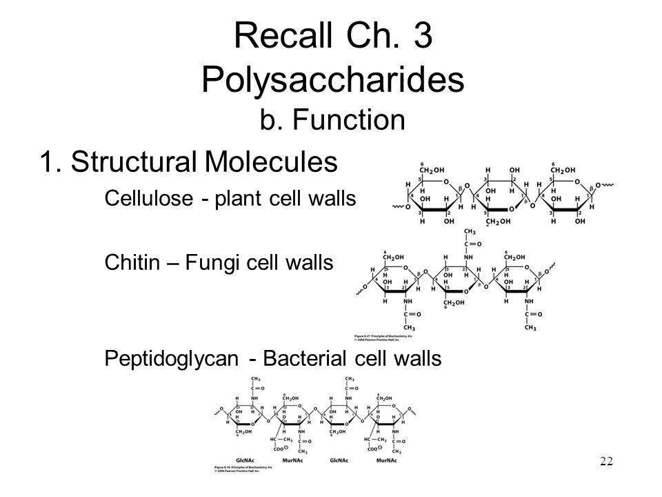 22 Recall Ch.3 Polysaccharides b. Function 1.