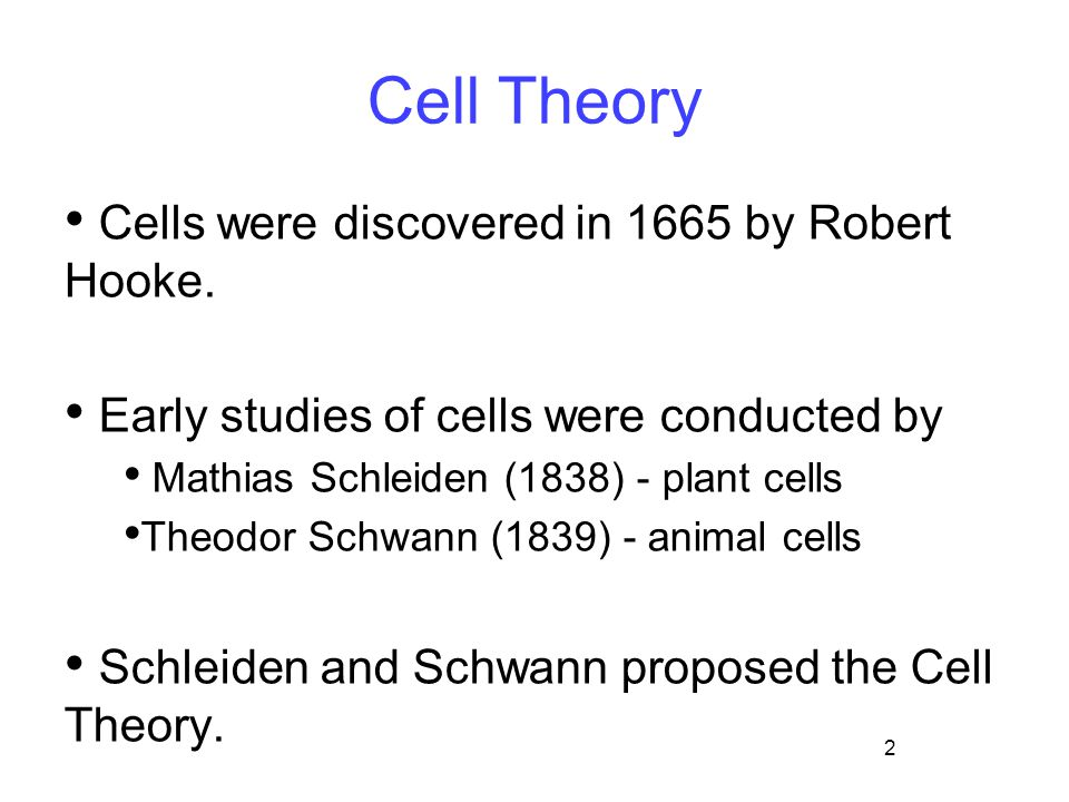 2 Cell Theory Cells were discovered in 1665 by Robert Hooke. Early studies of cells were conducted by Mathias Schleiden (1838) - plant cells Theodor S
