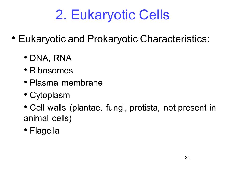 24 2. Eukaryotic Cells Eukaryotic and Prokaryotic Characteristics: DNA, RNA Ribosomes Plasma membrane Cytoplasm Cell walls (plantae, fungi, protista,