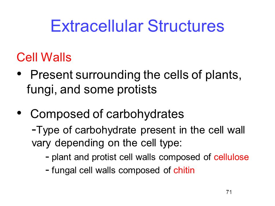 71 Extracellular Structures Cell Walls Present surrounding the cells of plants, fungi, and some protists Composed of carbohydrates - Type of carbohydr