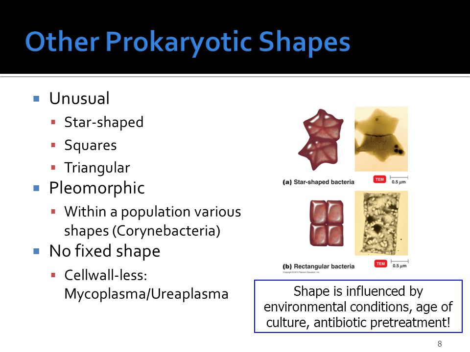  Unusual  Star-shaped  Squares  Triangular  Pleomorphic  Within a population various shapes (Corynebacteria)  No fixed shape  Cellwall-less: Mycoplasma/Ureaplasma Shape is influenced by environmental conditions, age of culture, antibiotic pretreatment.