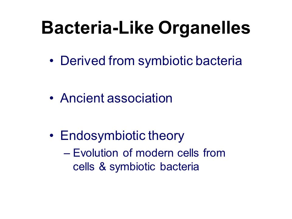 Bacteria-Like Organelles Derived from symbiotic bacteria Ancient association Endosymbiotic theory –Evolution of modern cells from cells & symbiotic bacteria