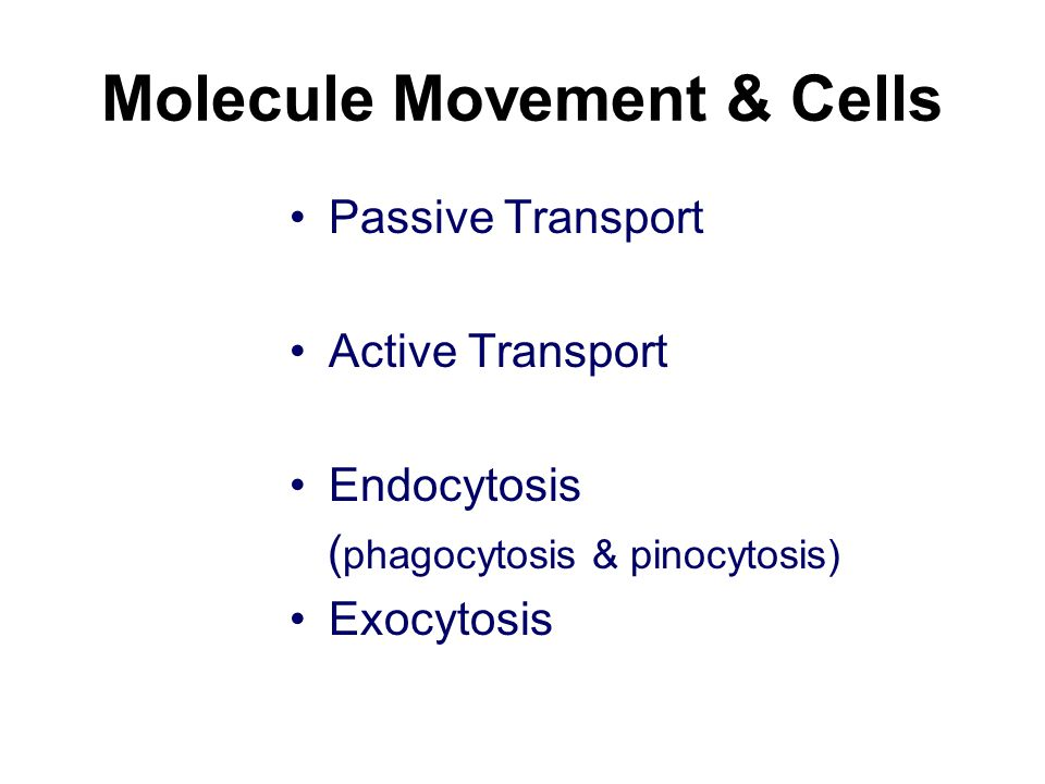 Molecule Movement & Cells Passive Transport Active Transport Endocytosis ( phagocytosis & pinocytosis) Exocytosis